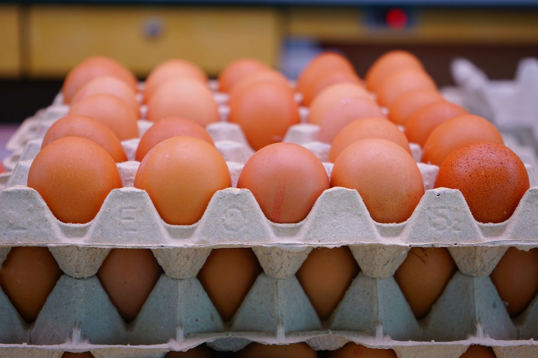 Cartel investigated in Australian egg probe