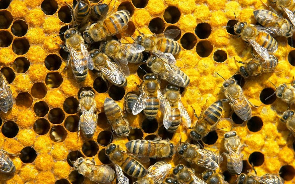 Bees working together