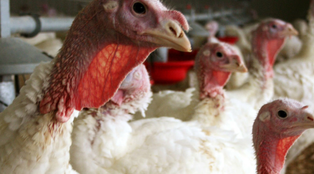 How does the bird flu crisis affect supply chains?