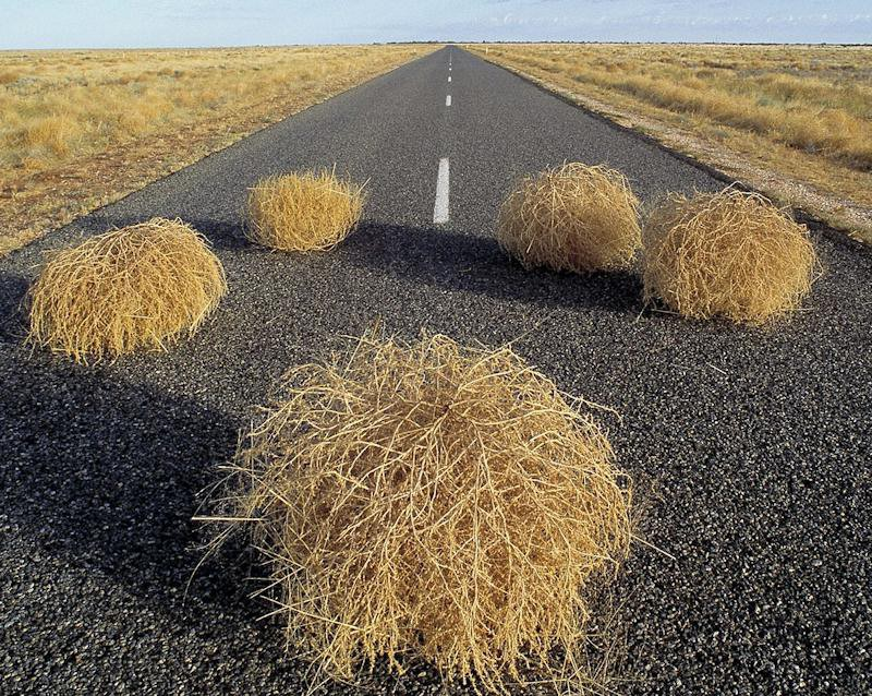 tumbleweed-roadkill_LRG