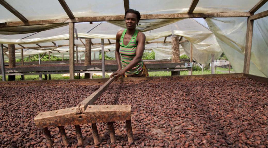 Empowering Brazil's cocoa farmers