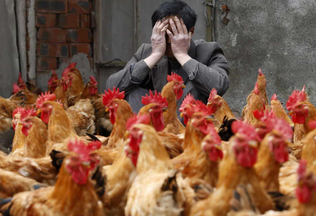 The threat from avian influenza on supply chains