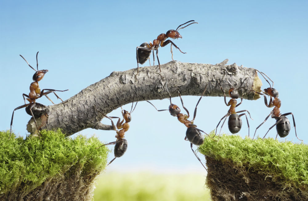 inspire-teamwork
