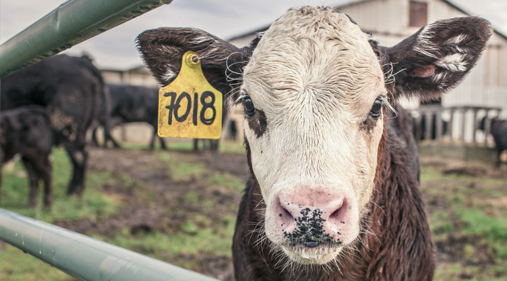 Fighting for the animal's rights in the food chain