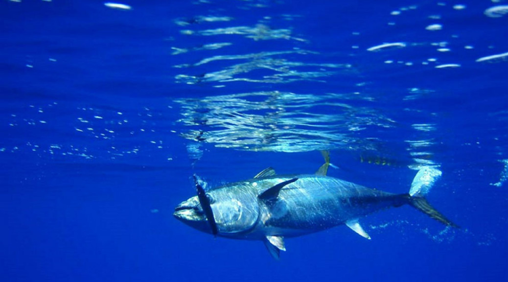 Calls for improved transparency in the tuna supply chain